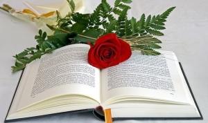 275 24 Poesia